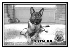 Photo of K9 Unit Dog Natscho
